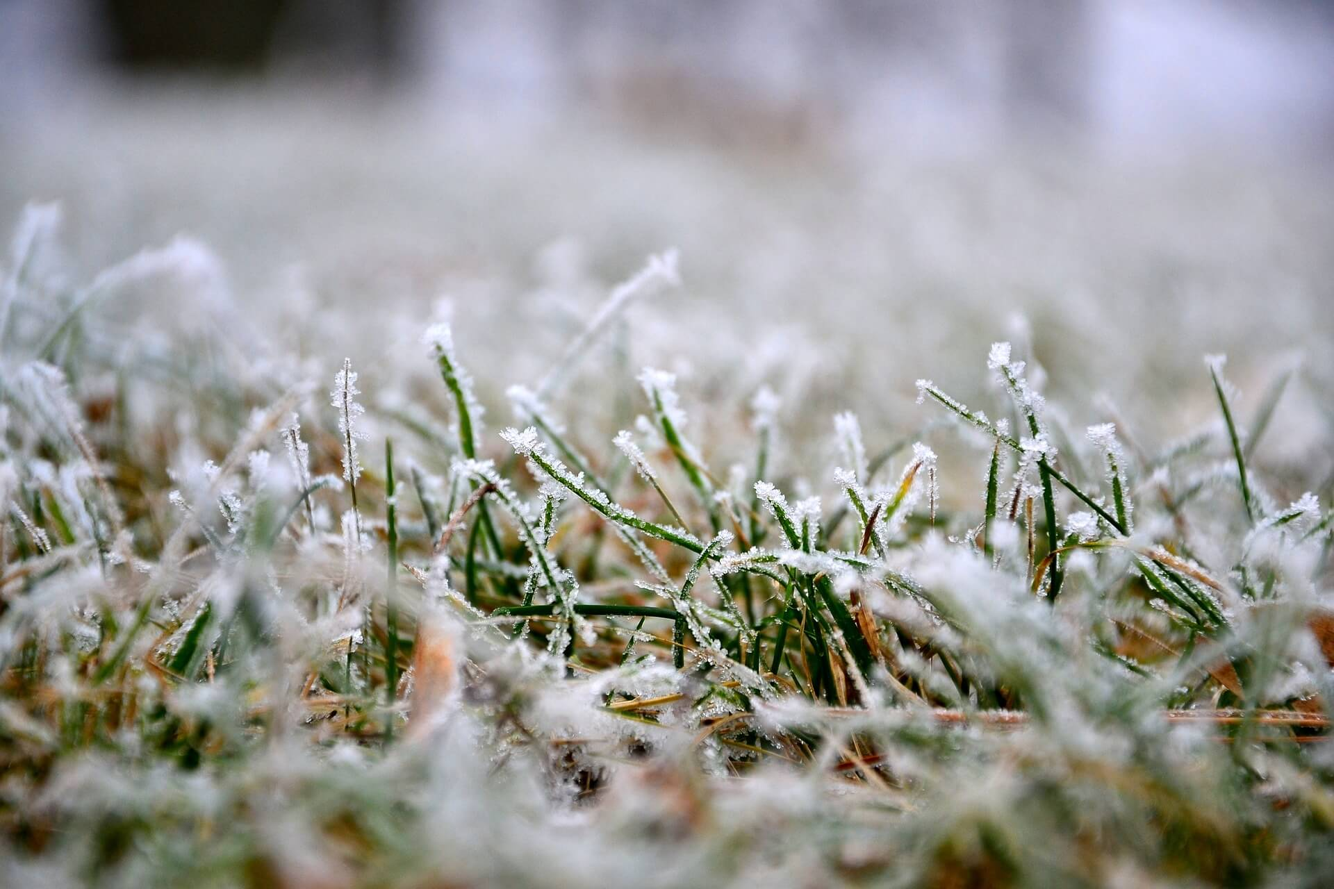 Winter Lawn-Care: Best Tips To Protect Your Garden This Winter